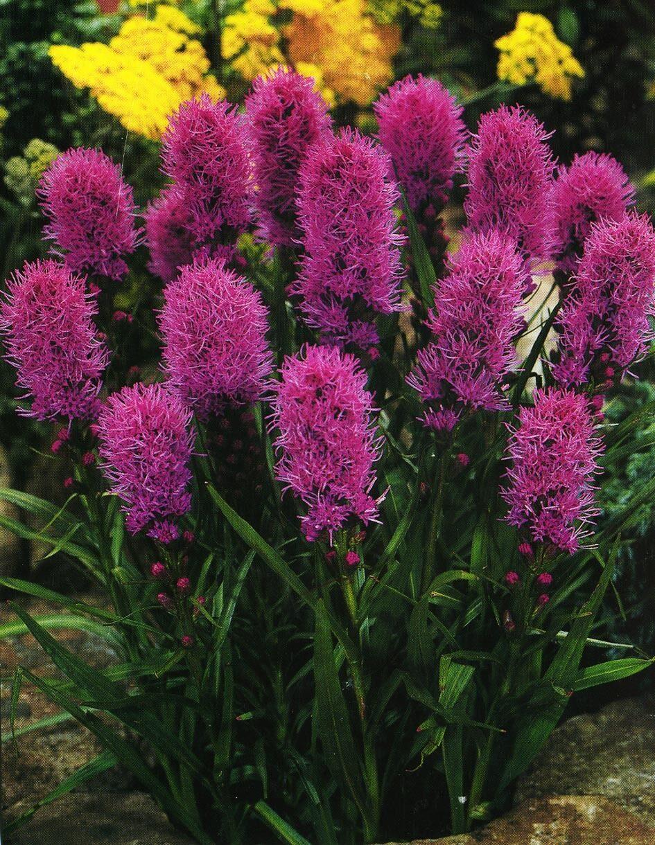 Фото и каталог садовых цветов и растений