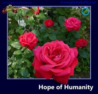 Hope of Humanity. 13 .1.jpg